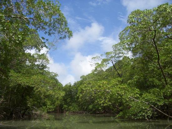 river_in_the_amazon_rainforest.jpg